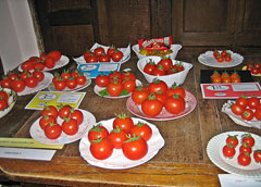 Competition tomatoes